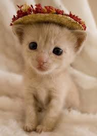 If you can't forgive me, then maybe you'll forgive this cute kitten in a bonnet. Image: fourms.catholic.com