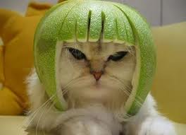 My thinking cap is not as stylish as this kitty's, but it's not far off! Image: critical-thinkers.com