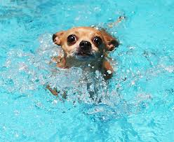 Keep going, little doggie! Image: sodahead.com