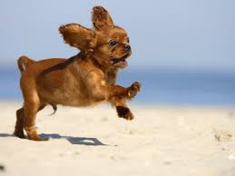 Throw the ball! Go on, throw it! Throw the ball! Throw the ball! Throw... *squirrel!* Image: squidoo.com