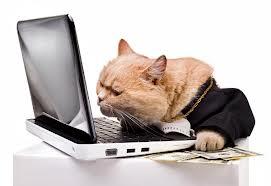 Image: catster.com