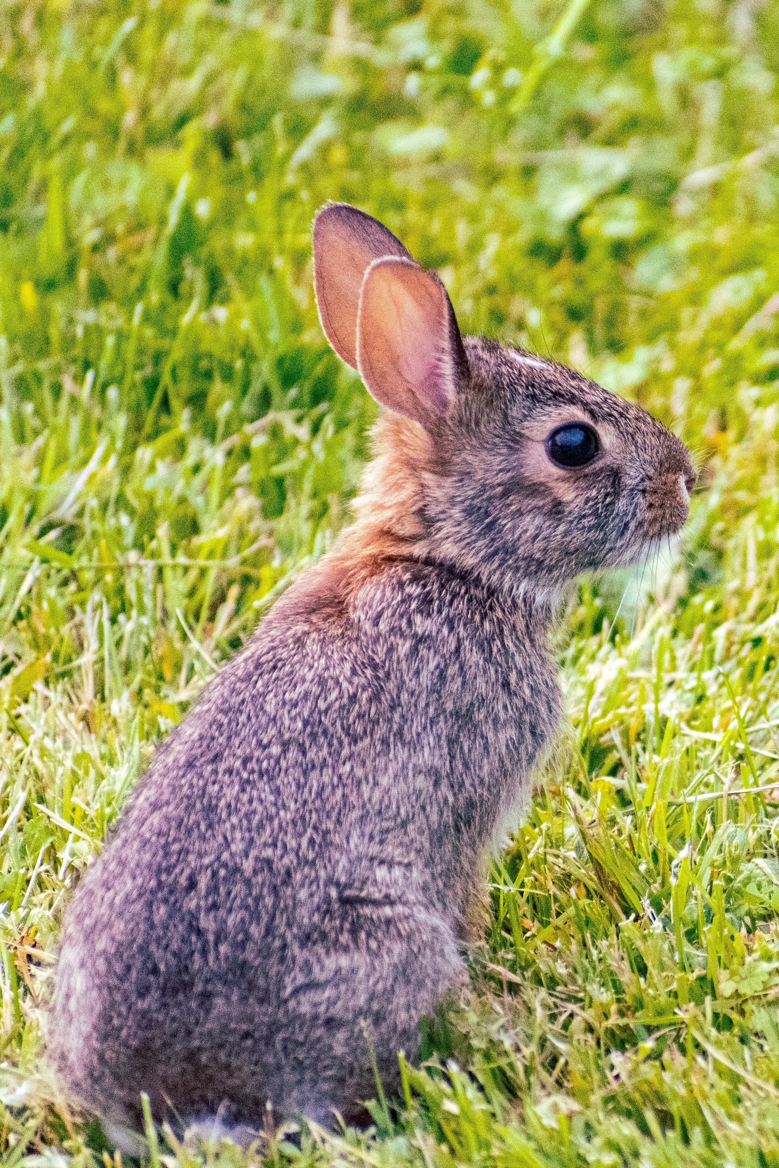 A rabbit on a background of grass